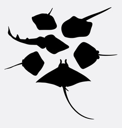 Stingray fish animal silhouette vector