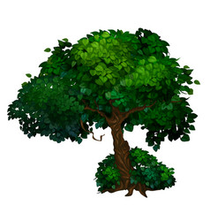 Tree with twisted trunk and green crown leaves vector