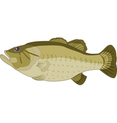 Image of fish on a white background vector image