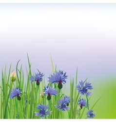 Poppy Cornflower vector image