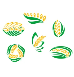 Symbols of cereal plants vector