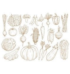 Vegetables sketch isolated icons set vector image