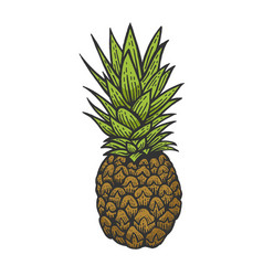 pineapple color sketch engraving vector image