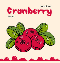 cranberry berries images vector image
