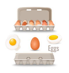 Eggs in shell inside cardboard container and vector