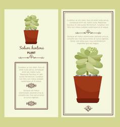 greeting card with sedum hintonii plant vector image