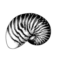 hand drawn sketch nautilus shell in black vector image