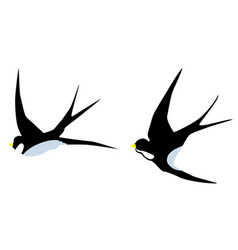 Swallow birds vector