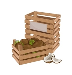 Wooden box full of coconut isolated vector image