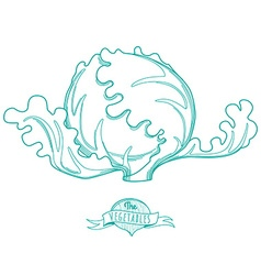 Outline hand drawn sketch of lettuce flat style vector image vector image