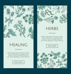 hand drawn medical herbs web banner vector image