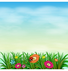 A garden with colourful flowers vector