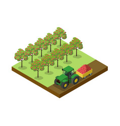 Crop harvesting in orchard isometric 3d element vector