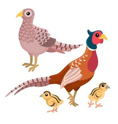 Family of pheasants on the white background vector image