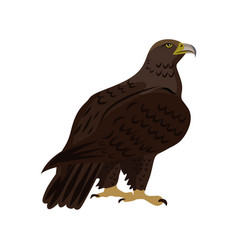 golden eagle sitting isolated vector image