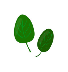 spinach green leaves icon healthy eating cartoon vector image