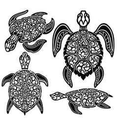 sea turtles vector image