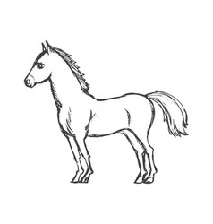 Beautiful horse from side vector
