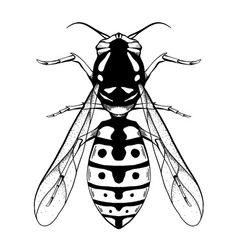 Contour black sketch a wasp with a top view on vector