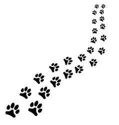 Path of animals black footprints dog or cat path vector