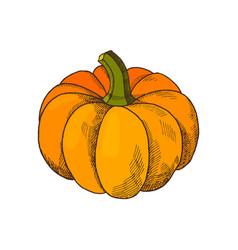 Pumpkin autumn harvesting season isolated vector