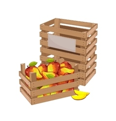 Wooden box full of mango isolated vector image
