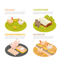 Chicken farm compositions set vector