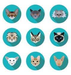 Flat icons set of pedigreed cats vector