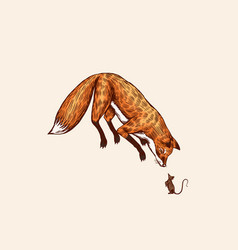 fox in a jump pose animal hunts for a mouse vector image