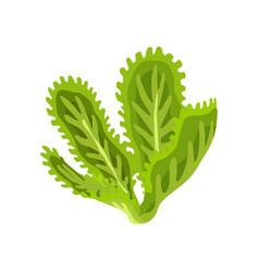 green fresh salad vegetable and herb organic vector image