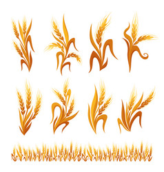 wheat ears decorations vector image