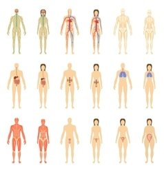Set of human organs and systems of the body vector image