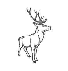 Adult wild deer isolated on white background vector image vector image