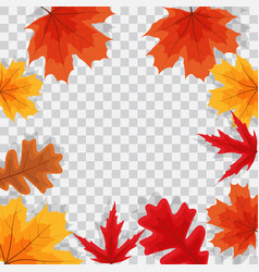 Autumn natural leaves on transparent background vector