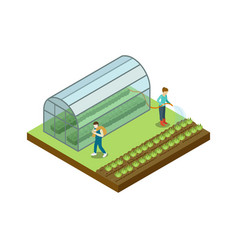 People working in greenhouse isometric 3d element vector