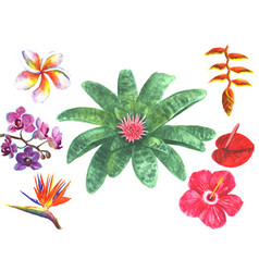 Set of tropical exotic flowers vector