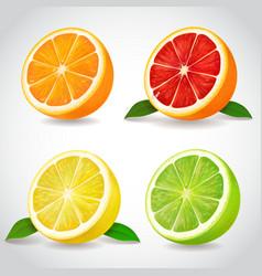 fresh citrus fruit halves orange grapefruit lemon vector image