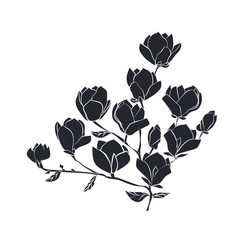 flowering branch of magnolia on white background vector image vector image