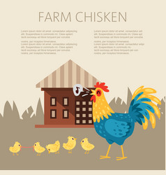 farm chicken characters singing rooster banner vector image
