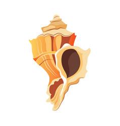 rapana shell an empty shell of a sea mollusk vector image