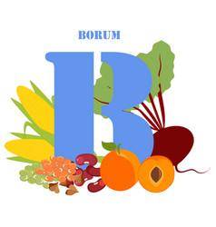 Borum healthy nutrient rich food vector