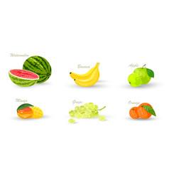 Collection tropical fruits vector