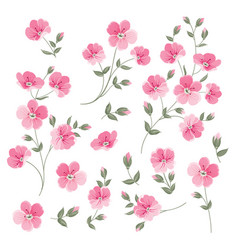 set linen flowers elements vector image