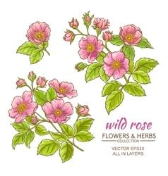 Dog rose flowers set vector