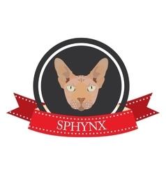 Flat icon pedigreed cat sphynx vector