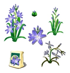 Seeds stages of growth and wilting purple flowers vector image
