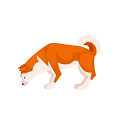 shiba inu dog cute sniffing pet animal side view vector image