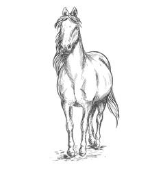 Walking white horse sketch portrait vector image