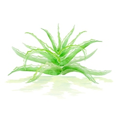 Aloe bush vector