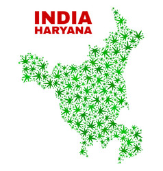 Cannabis leaves mosaic haryana state map vector